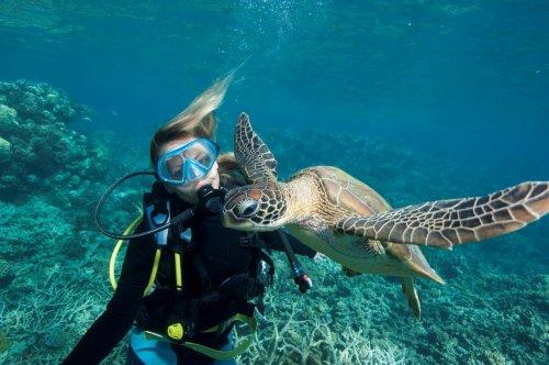 オーストラリアで学ぶ海洋学/海洋生態学